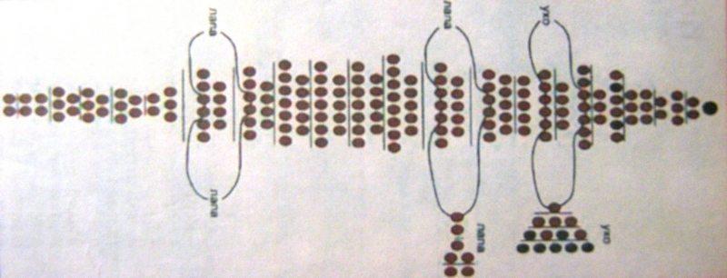 Схема плетения объемной таксы