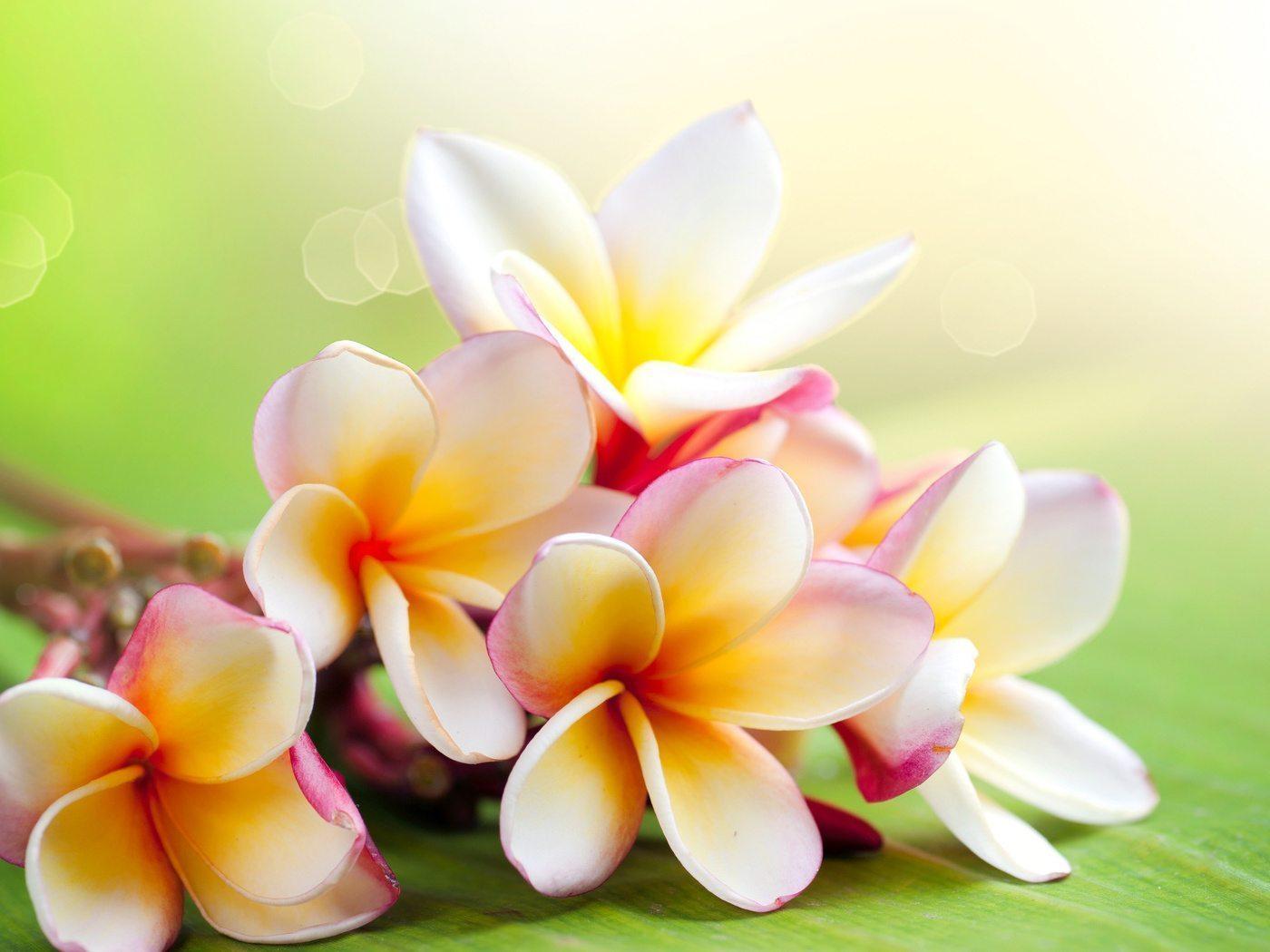 для мамы из бисера один красивый цветок схема